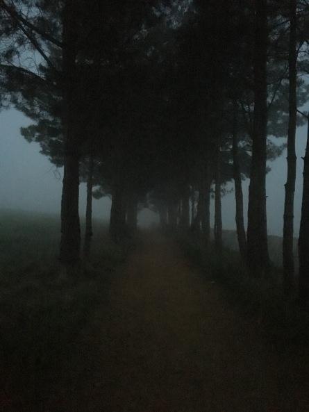 IMG_9354