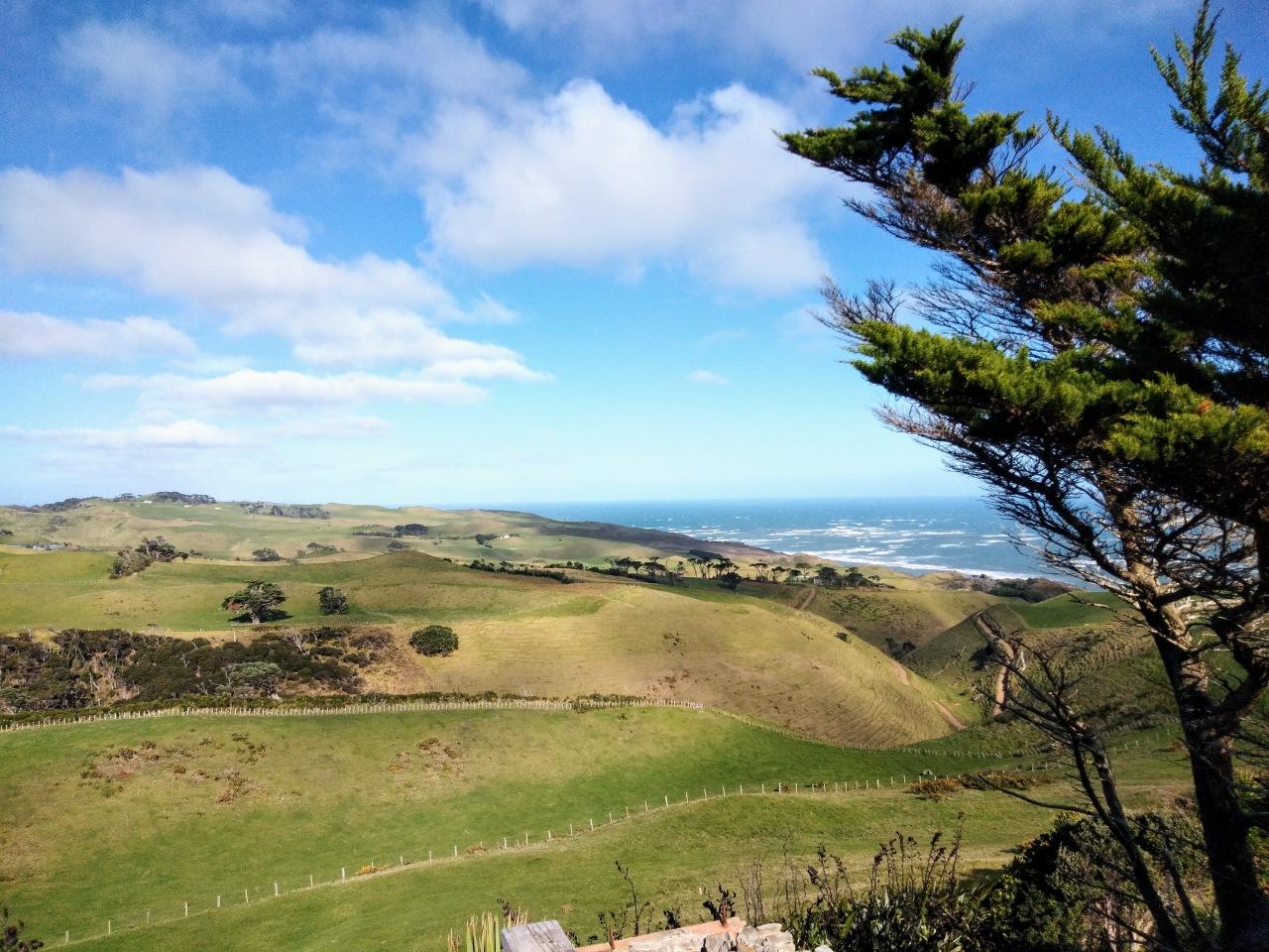 NEW ZEALAND (12)